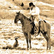 Rancher on horseback with yound working stockdog