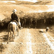 Stockdog working cattle on trail dirve with cowboy on horse.